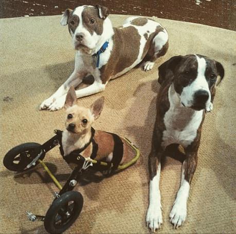Tyson, Boston and Sonny