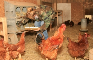 http://www.sit-stay-play.com farm animals