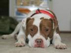 10 Ways You Can Be a Damn Good Dog Parent