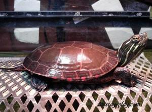 Turtle Pet Care by sit-stay-play