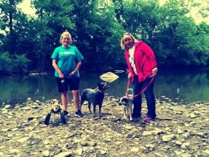 www.sit-stay-play.com Yorktown Dog Walking Club