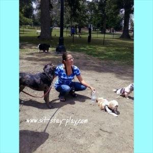 Heekin Dog Park