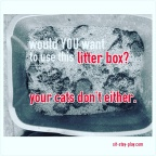 Cat Litter Box Basics