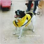 Fun Halloween Dog Costumes and Pet Nail Trims in Muncie