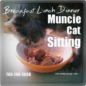 Muncie-cat-sitting