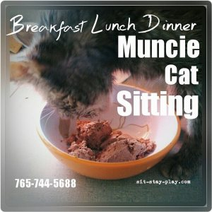 Muncie-cat-sitting
